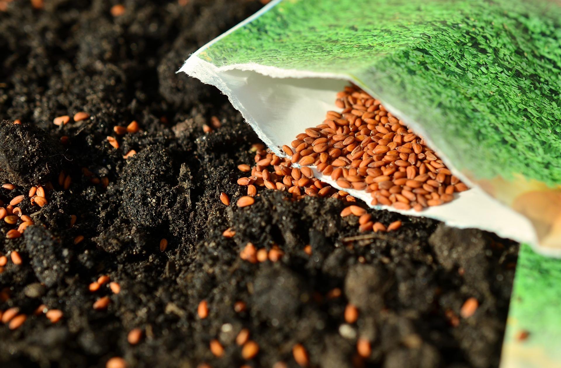 seeds-1302793_1920